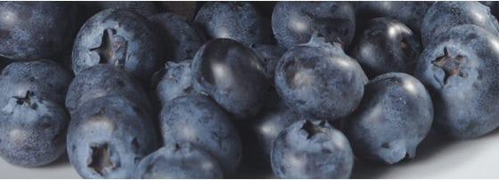 Bakels Pie Fillings - Blueberry 50%